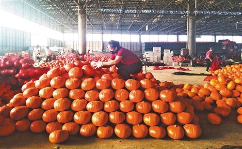 臺風壽光蔬菜市場影響逐漸消除 蔬菜之鄉交易量增價穩