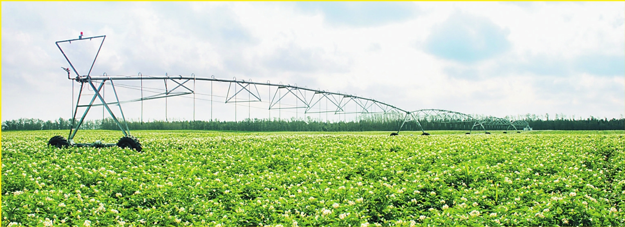 黑龙江齐齐哈尔打造嫩江流域生态高效农业