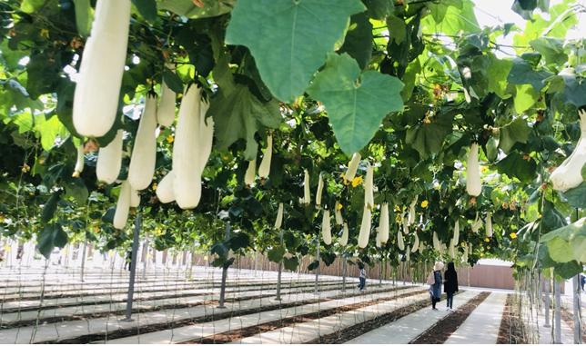 一睹江苏蔬菜产业发展最前沿 第