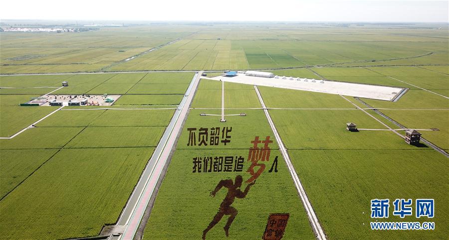 黑龍江富錦:大地為紙,水稻為墨,稻田彩繪展畫卷